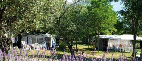 De camping Le Petit Bois is een rustige camping gelegen in de Ardèche nabij de Gorges de l'Ardèche en op 800 m van de stad Ruoms in een prachtige ongerepte natuur nabij de rivier Ardèche.