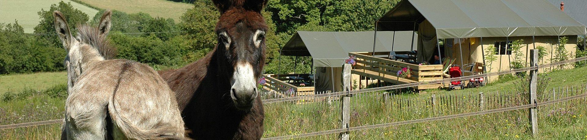 Morvan Rustique is een kleinschalig vakantieparadijs voor gezinnen met kids die willen genieten van de rust en de natuur midden in de Morvan (Bourgogne).