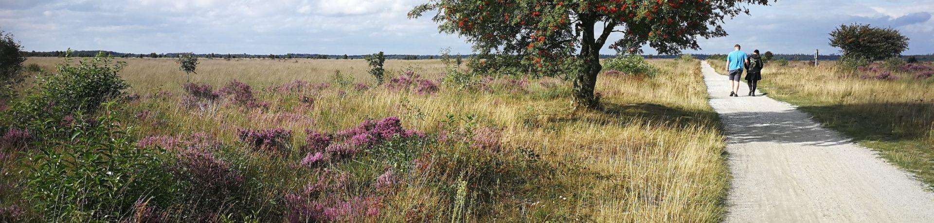 Misschien wel de kleinste camping van Nederland, dan toch in ieder geval wel van Friesland. Je bent van harte welkom om je trekkers-tentje op te zetten in onze charmante boerderijtuin.