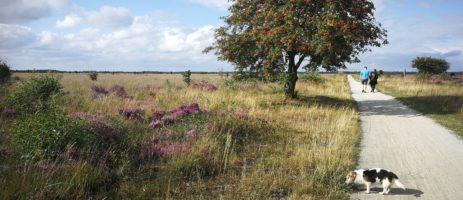 Rustieke minicamping in Friesland voor een charmante vakantie in de natuur. Je bent van harte welkom om je trekkers-tentje op te zetten in onze groene boerderijtuin.