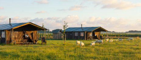 Authentieke boerderijcamping op Ameland met 6 luxe safaritenten met een panoramisch uitzicht over het weiland en de duinen.